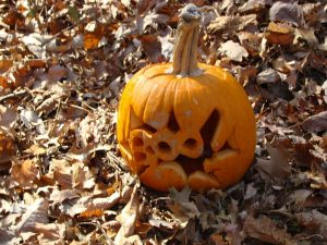 800px-Jack_o_lantern_pumpkin_in_leaves-300x225